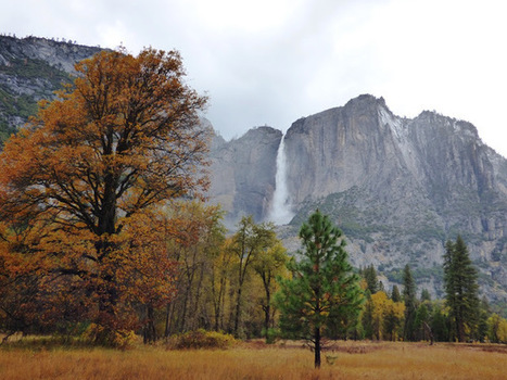 """A Wet Day in Yosemite Valley; """"Spring"""" Comes REALLY Early   Authentic Yosemite   Scoop.it"""