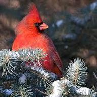 Ohio Wildlife Education Update: Winter Adventures to Come | #gardenchat | Scoop.it
