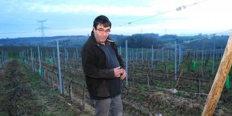 Le vignoble face aux changements climatiques   Vignes et vins   Scoop.it
