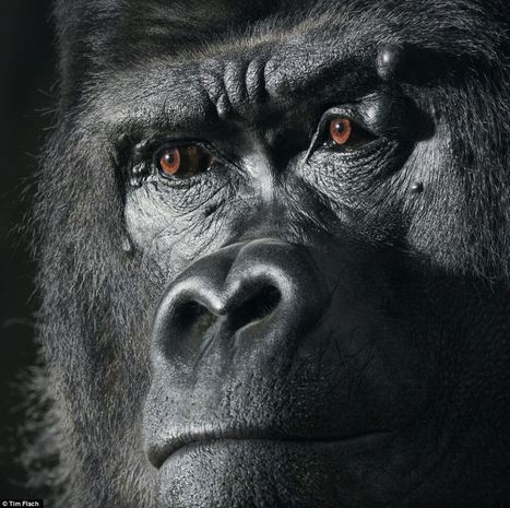 Almost human: wild creatures making unnervingly similar gestures to us | All Things Photography | Scoop.it