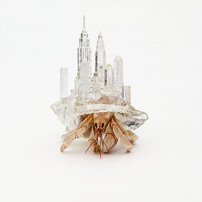 3D homes for hermit crabs - in pictures | The 3DP Report | Scoop.it