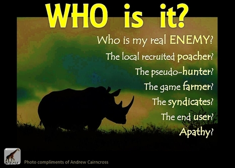 Who is the Rhinos' REAL Enemy? | What's Happening to Africa's Rhino? | Scoop.it
