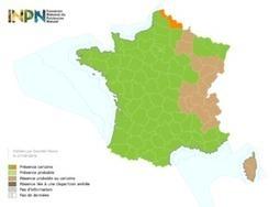 Frelon Asiatique : Le frelon également détecté dans le Nord | EntomoNews | Scoop.it
