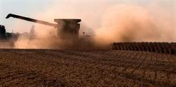 Farmers surprised with soybean yields at harvest | News-Gazette.com | oilseed | Scoop.it