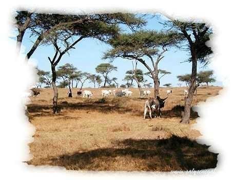 Miser sur l'irrigation et le pastoralisme pour transformer le Sahel - Témoignages - 13 novembre 2013 - Nouvelles d'Afrique | SécuriteAlimentaireSahel | Scoop.it