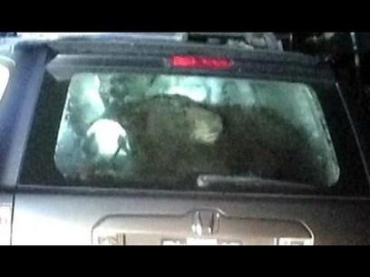 Bear Locks Itself in SUV   The Pit Boss   Scoop.it