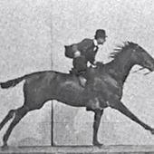 L'ancêtre du GIF: le cheval galopant d'Edward Muybridge | Slate | Cheval | Scoop.it