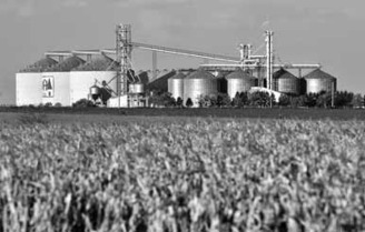 China may begin importing corn from Argentina as demand soars|Business|chinadaily.com.cn | MAIZE | Scoop.it