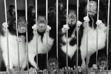 PETA: NFL Funds Cruel Animal Testing - Huffington Post | World news | Scoop.it