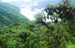 Inició el IX Congreso Latinoamericano de Derecho Forestal Ambiental | Derecho ambiental | Scoop.it
