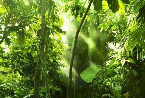 Scientists estimate 16,000 tree species in the Amazon | Amazing Science | Scoop.it