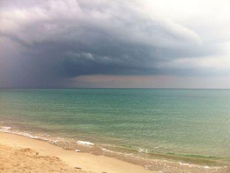 Météo des plages & méduses : un début de semaine plus calme   méduses   Scoop.it