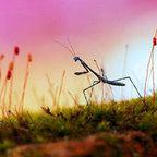 Ces superbes clichés macroscopiques vous dévoilent toute la magnificence des insectes qui nous entourent   Livres animés et Pop-up   Scoop.it