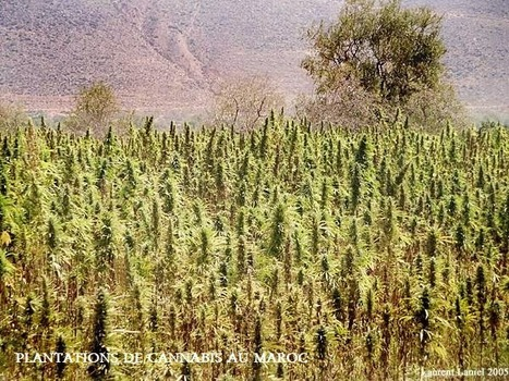 Quand terrorisme rime avec trafic de drogue | Plan de paix au Sahara Occidental | Defense globale | Scoop.it