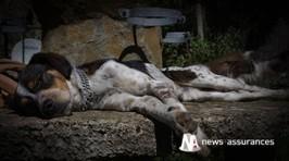 Bien-être animal : les Français ne consacrent pas assez de temps à la promenade de leur chien | Services vétérinaires | Scoop.it