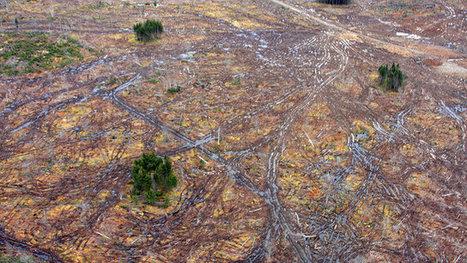 Premier Stephen McNeil: Stop destroying Nova Scotia's forest for biomass power generation   Nova Scotia Art   Scoop.it