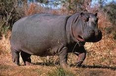 BENIN: Des écogardes pour renforcer la protection des hippopotames dans ... | Voyager au BENIN | Scoop.it