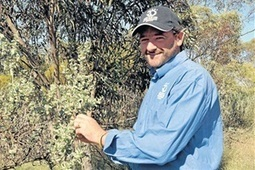 Emu bush lowers livestock methane - State News - Livestock - Cattle - The Land | Australian Plants on the Web | Scoop.it