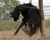 STOP CRUELTY AND SLAUGHTER OF HORSES IN ROMANIA - The Petition Site   horses   Scoop.it