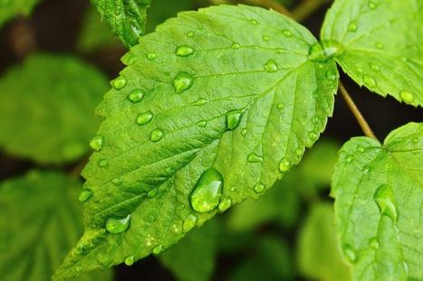 Come realizzare un sistema di irrigazione   Love DIY   Scoop.it