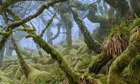Ancient trees: your Green shoots photographs | Garden Libraries | Scoop.it