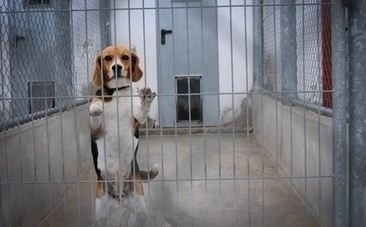 Why We Should Test on Humans Not Animals - Care2.com | Animal Abuse | Scoop.it