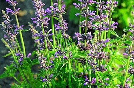 Top 10 Low Maintenance Perennials | Budget - Birds & Blooms | Landscape Design DIY, Tips, and Best Practices | Scoop.it