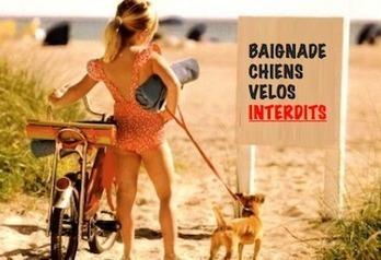 Les lois les plus absurdes en France ! » Les Petits Frenchies | Remue-méninges FLE | Scoop.it