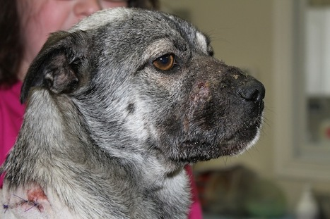 'Hope' Lives on: Dog Survives Savage Stabbing and Brutal Duct-Taping, Finds Forever Home | Pet News | Scoop.it