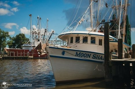 """Tweet from @UprootedPhotos 