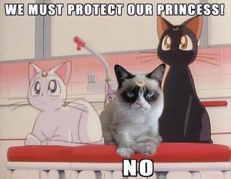 Twitter / emilyouu: Hey! Luna/Grumpy Cat in one ... | women's fashion and beautiful pic | Scoop.it