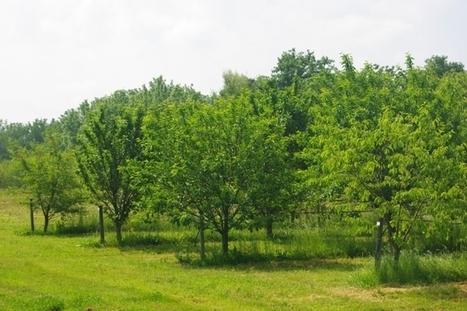 INRA - Haies et biodiversité dans les vergers | Nourrir la planète... autrement | Scoop.it