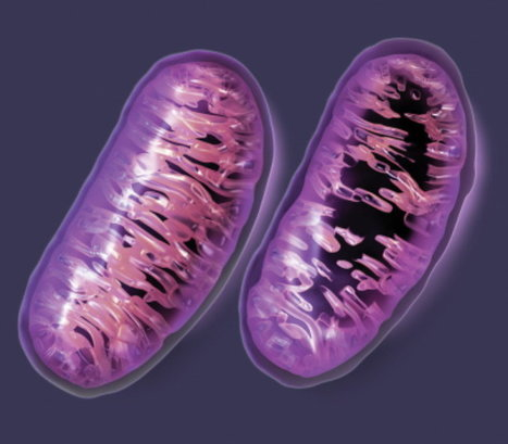 "Thanks Big Pharma for the Mitochondrial ""collateral damage"" 