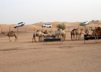 Experience Exceptional Safari Ride in Dubai | rakarekodamadama | Scoop.it