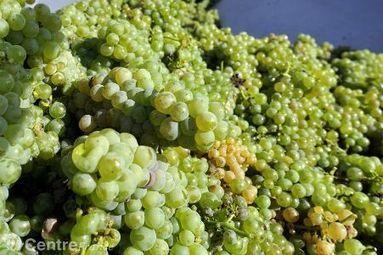 Un cépage et huit cents vins différents au Concours mondial du Sauvignon | Le vin quotidien | Scoop.it