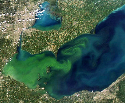 ScienceShot: An Algal Bloom for the Record Books - ScienceNOW | SJC Science | Scoop.it