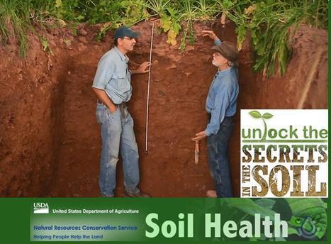 La Science de santé du sol : regardez plus profond ! C'est un spécialiste des sols aux USA qui le dit ! | Ecologie, Agro-écologie, Enseignement agricole | Scoop.it