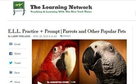 My Latest NY Times Interactive For ELLs Is On Parrots & Pets | Edtech PK-12 | Scoop.it