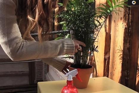 Avec Smart : votre pub se transforme en plante ! | Mdelmas.net | | Sport and Marketing | Scoop.it