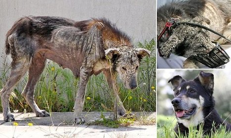 The dog who was saved from turning into stone | Caring About Pets | Scoop.it