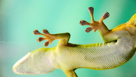 Gecko feet inspire a new way to clean up dust - Futurity | MishMash | Scoop.it