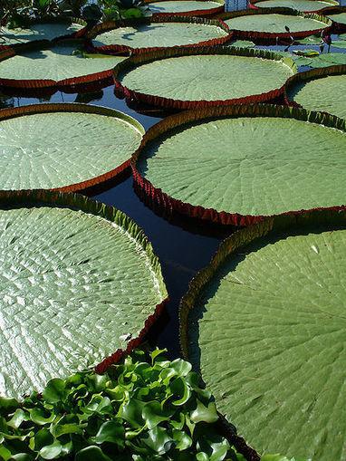 Botanical Behemoth | Erba Volant - Applied Plant Science | Scoop.it