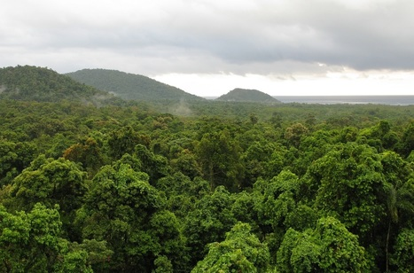 Rainforest plants have DNA barcodes recorded | Healthy Recipes and Tips for Healthy Living | Scoop.it