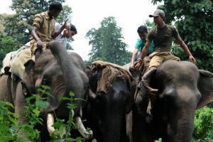 Un hôtel thaïlandais offre un café issu de crotte d'éléphant | Mais n'importe quoi ! | Scoop.it