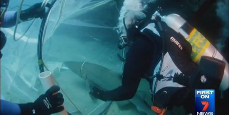 WATCH: You Have To Be Pretty Brave To Rescue A Shark | Xposed | Scoop.it