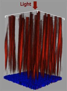 Natural Optical Fibers Sort Colors in Retina - Photonics.com | Optometry | Scoop.it