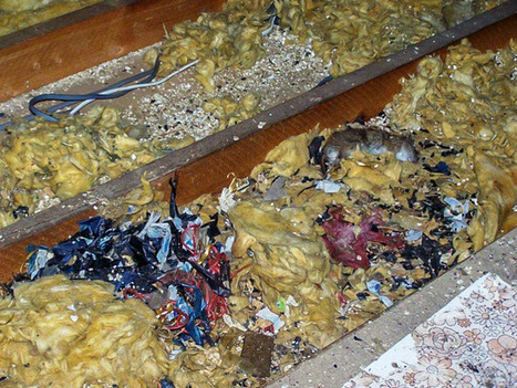 Loft Clearance, Decontamination and Insulation   Rapid Environmental Services   Scoop.it