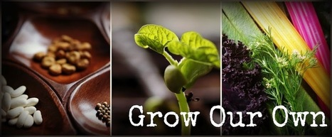 Grow Our Own ~ An Allotment Blog: Allotmentherapy - The Wisdom of Plants | Urban Farming News | Scoop.it