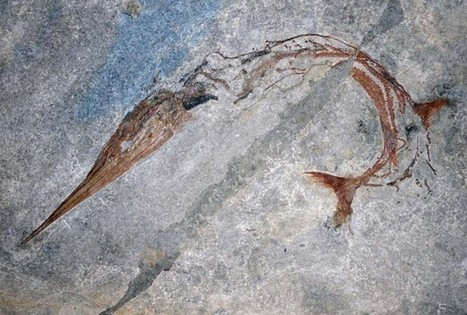 Fossil Leads To Discovery Of New Evolutionary Mechanism For Body Elongation - RedOrbit. | Evolution's Prime | Scoop.it
