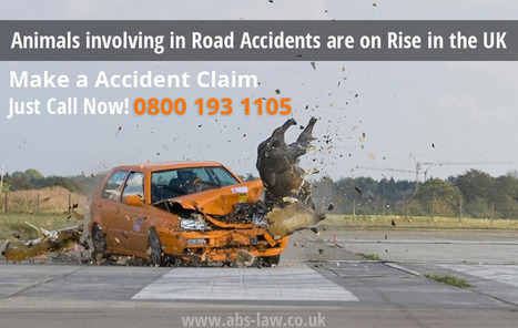 Animals involving in Road Accidents are on Rise in the UK | My Website / Blog | Traffic Accident Claim UK | Scoop.it